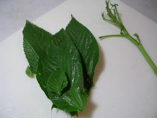 モロヘイヤは、葉だけ摘み取る